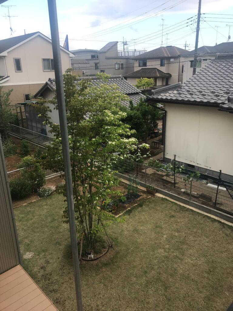 木の家のヤマボウシの木の花