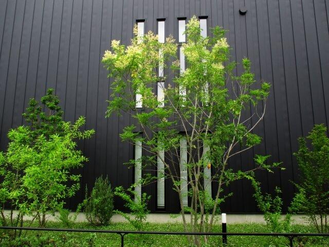 無印 木の家 庭 玄関 シンボルツリー ヤマボウシ
