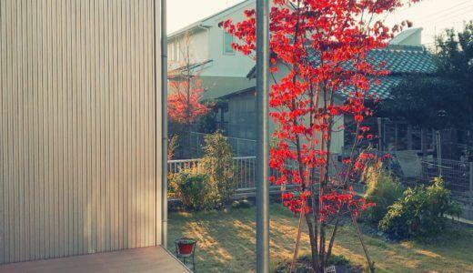 春も秋も美しい。シンボルツリーは「ヤマボウシ」がおすすめの理由