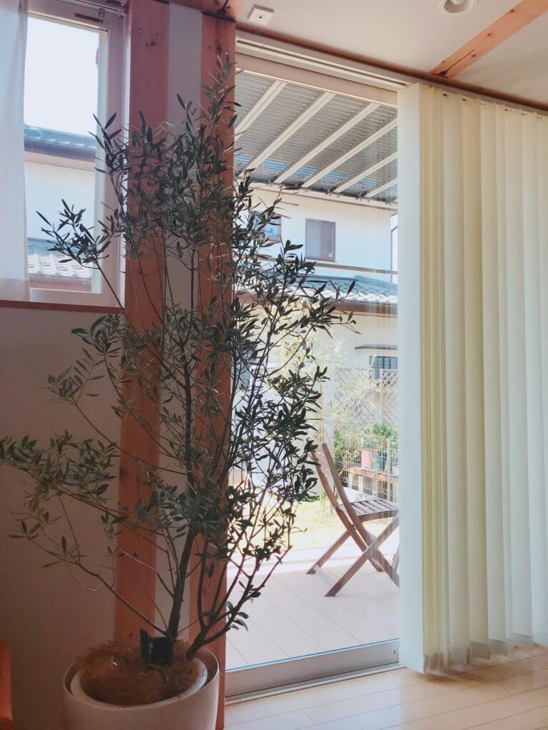 無印 木の家 リビング 観葉植物 オリーブ