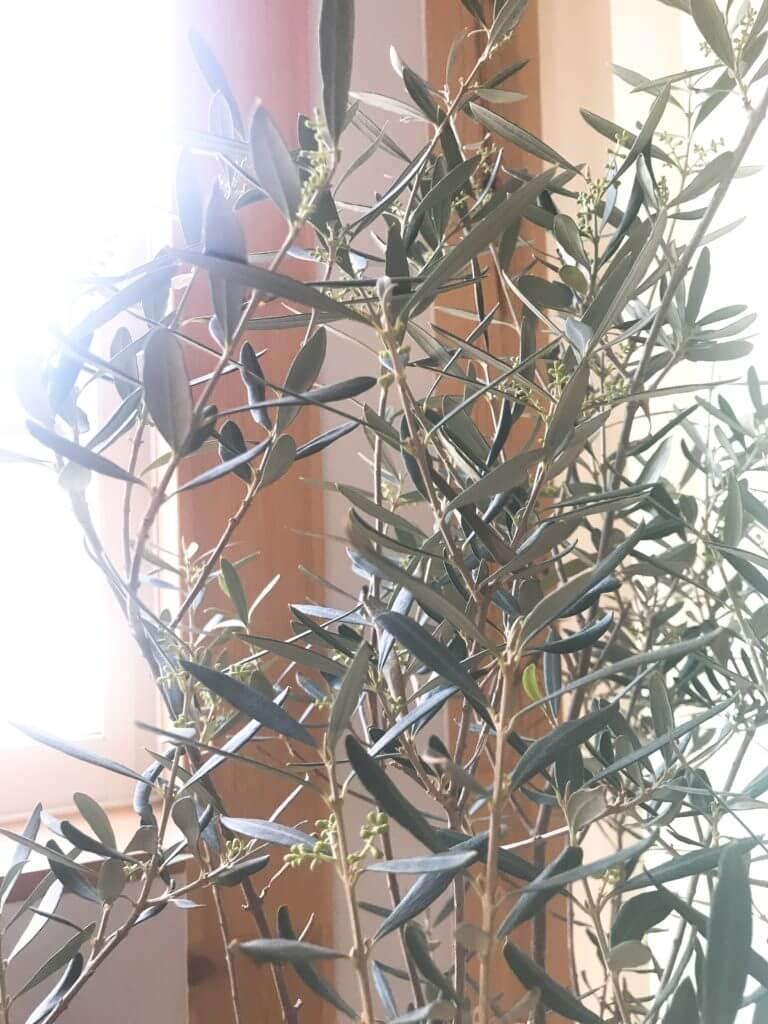 木の家の室内のオリーブの実