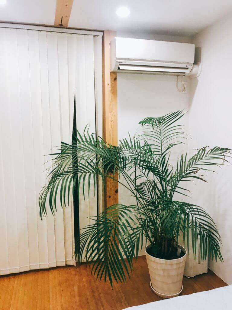 寝室の観葉植物のアレカヤシ