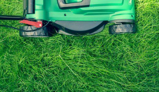 庭に何かの穴が無数に。。害虫のコガネムシを芝から駆除する方法
