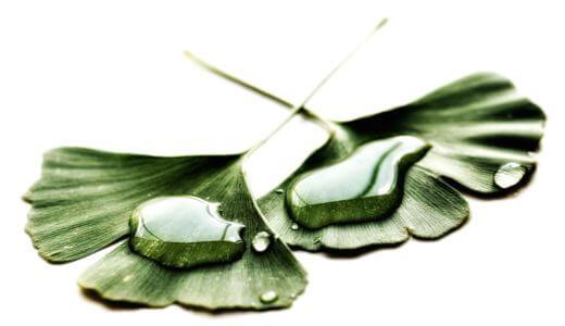寝室におすすめの観葉植物はアレカヤシ。毎日快眠できています。