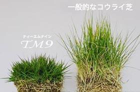 お手入れが簡単で、色味が美しい芝はトヨタのTM9。芝刈りは年に3回