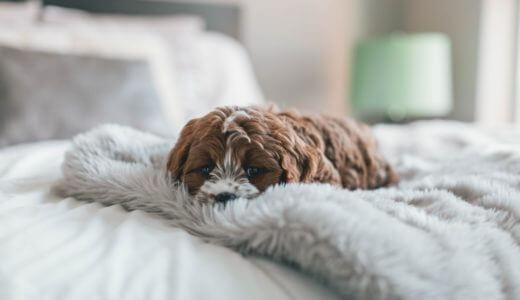 夏場も朝まで快眠!寝室にはエアコンとサーキュレーターを置け!寝冷え防止、熱中症対策