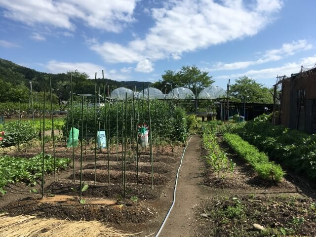 家庭菜園の間隔