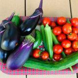 家庭菜園で大量の採れた野菜