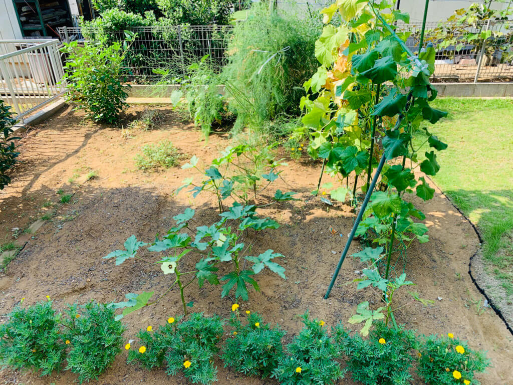 家庭菜園で育った野菜など