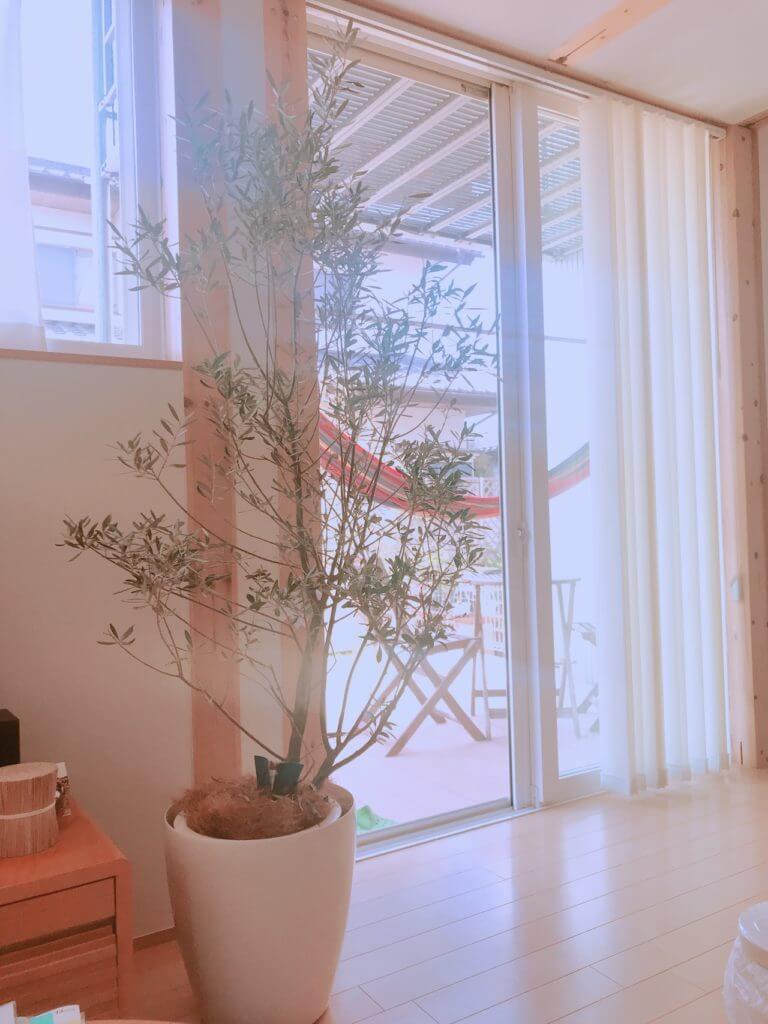 ヤシのヒゲの植木鉢