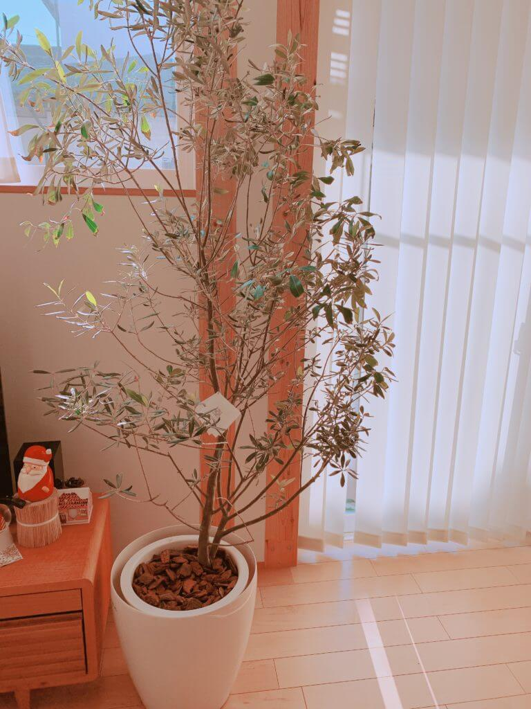 ウッドチップ(デコレーションバーク)の植木鉢