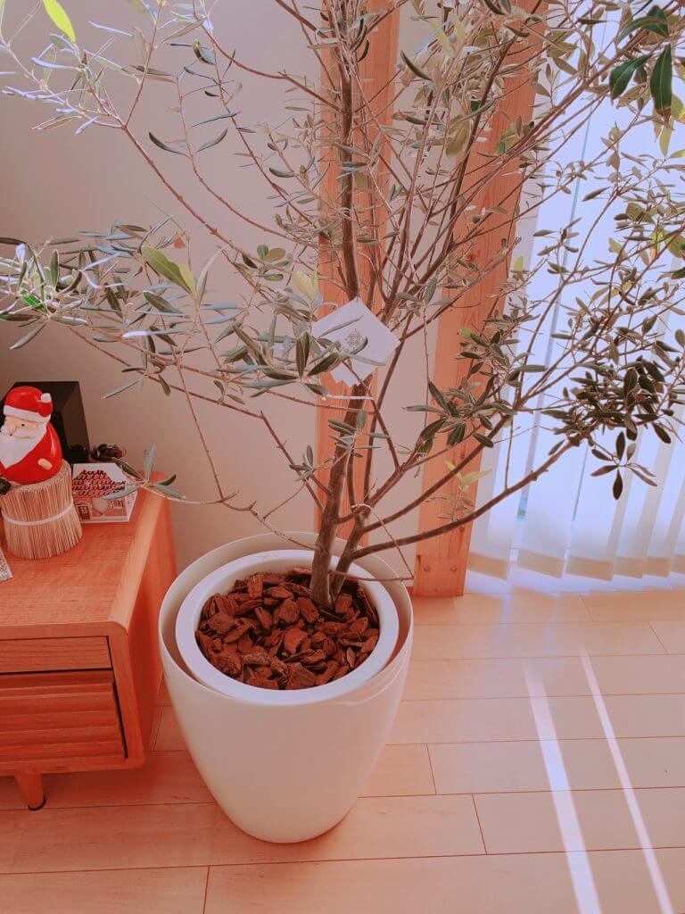 購入したデコレーションバークを植木鉢に敷き詰めた様子