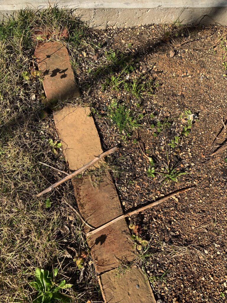 畑に芝が侵入してきている図