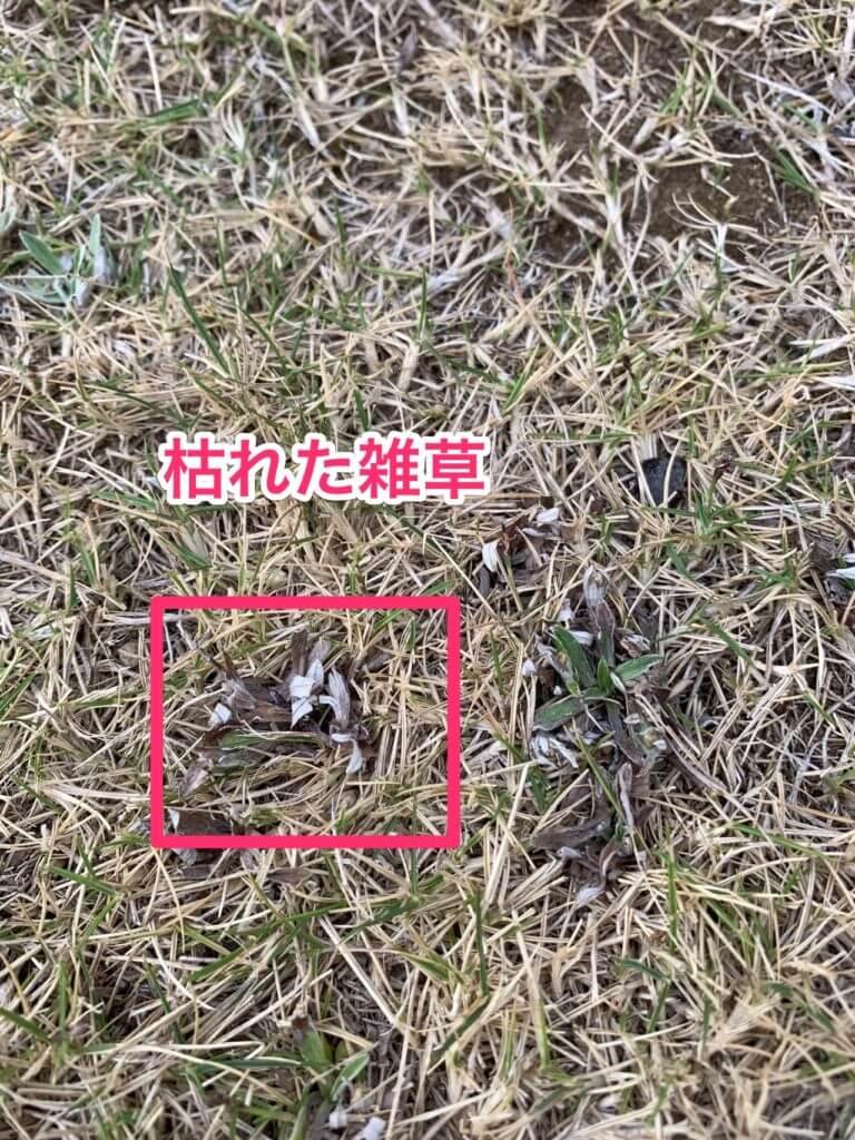 ラウンドアップで枯れた雑草
