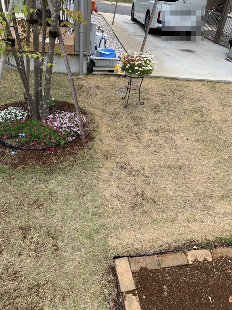 ラウンドアップで枯れた芝