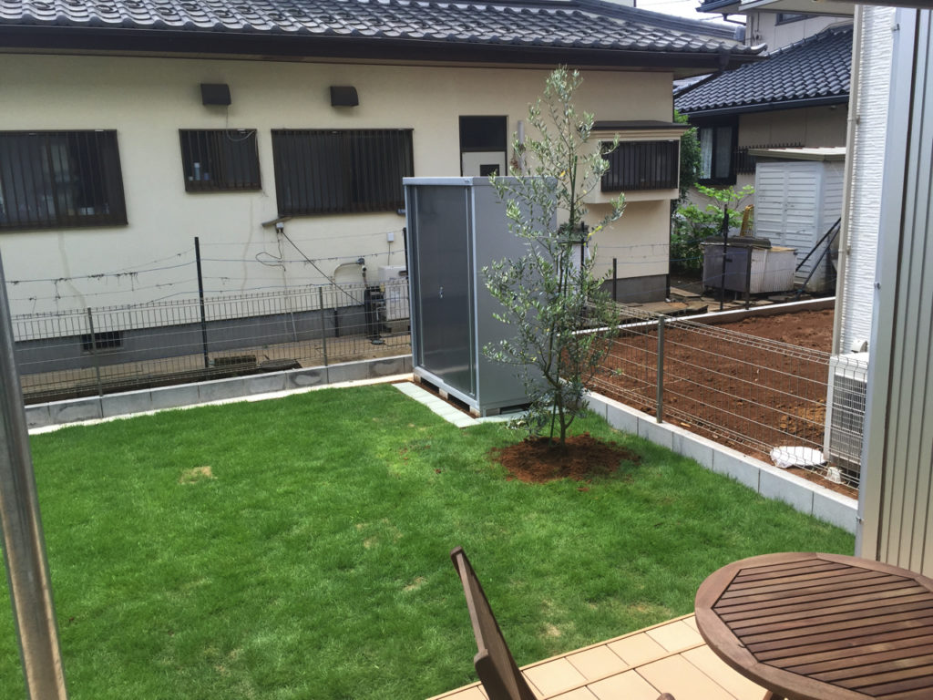 家の庭に天然芝張り、オリーブを植えた写真